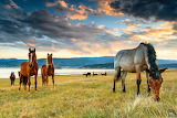 Evgeni Dinev Photography-Curious Horses