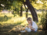 Little Girl And Some Goslings