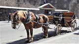 Horse and carriage, Montreal - Canada