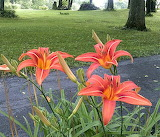 Day Lilies new 03