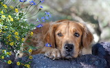 hond-rots-en-bloemen