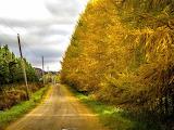 Harrington Quebec - Autumn