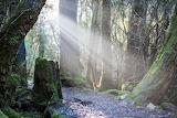 Weindorfers Forest Walk, Tasmania