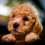 ☺♥ Puppy...