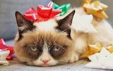 #Grumpy Cat Party