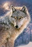 Magnifique loup en hiver