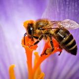 Cute Hard-Working Bee...