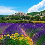 ☺ Lavender fields in France...