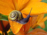 Colorful snail on day lily from Microsoft Jigsaw by auricle99