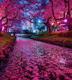 River Of Blossoms