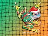 Christmas Santa Lizard