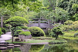 Japanese style Park with a pond nature