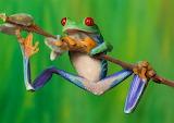 #Colorful Tree Frog Angi Nelson Photoghrapher