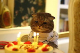 kitty blow out your candles