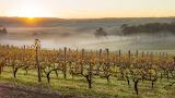 Margaret River Vineyards, Australia