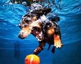 #Underwater Dog by Seth Casteel