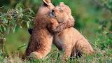 Baby-lion-hug