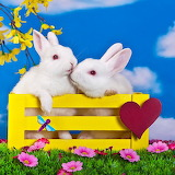 White Rabbits Kissing...