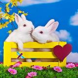 White Rabbits Kissing...