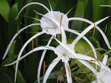 Outdoor-blossom-growth-plant-stem-flower