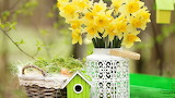 Basket, bouquet, spring, Yellow, daffodils, flowers, bird cage