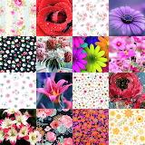 Flower Collage 1