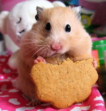 Cute-animal-pics-part7-5