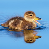 Happy Duckling...