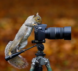 ☺♥ Funny squirrel...