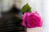 ~Piano Rose~