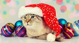 Cat with Christmas hat