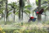 Parrots, birds, flight, forest, palm trees, mist, nature