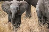 elephant babe