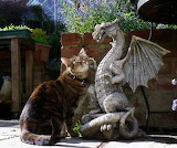 Dragon pets kitty