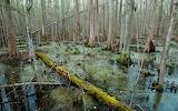 Maroons great dismal swamp