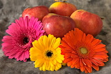 Fruit, apples, food, flowers, gerberas, colorful