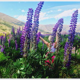 ^ Lupines