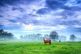 Evgeni Dinev Photography Brazen Stallion