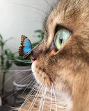 Wow a butterfly