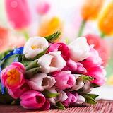 * Tulip Bouquet...