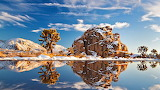 Snow in Joshua Tree National Park - California