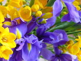 #Irises