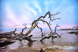 Downed tree at sunset off Roanoke Island