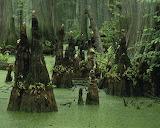 Cypress creek,Illinois