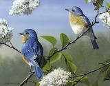 Songbirds ~ Robert Hautman