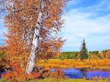 Typical autumn