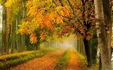 Осень 16