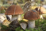 грибы 50