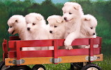 #Five Cute Puppies on Toy Trolley