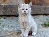 Little beige kitty